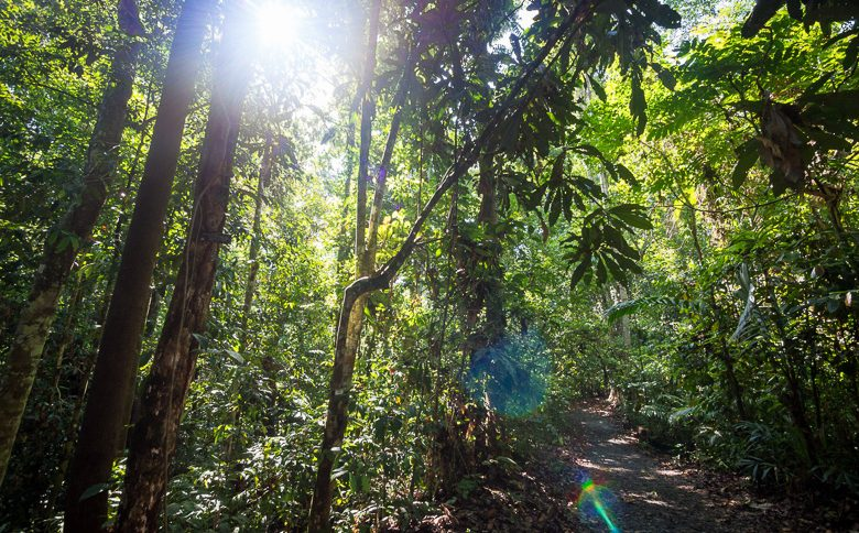 Choose a vegan lifestyle and keep this tropical forest lush and green forever